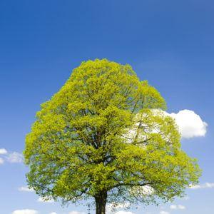 Sos trees