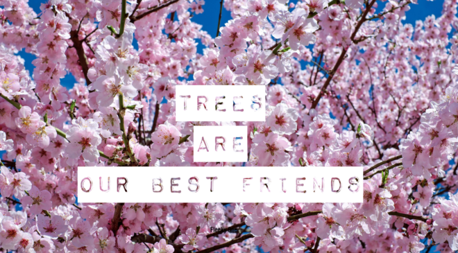 Trees are our best friends