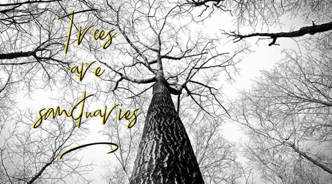 Trees are sanctuaries